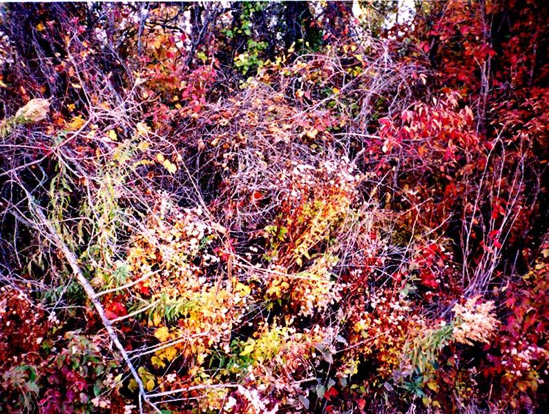 autumndsoto2.jpg